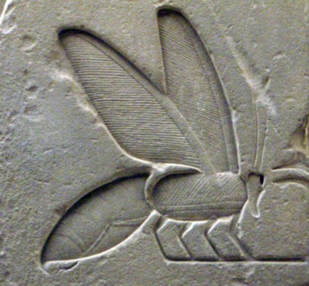 Los jeroglíficos frecuentemente adornaban paredes de templos y tumbas. Cámara funeraria. Pirámide de Unas. Quinto Dyn. Sakkara