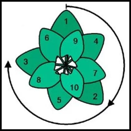 Los pétalos de una flor al formarse siguen una pauta en espiral
