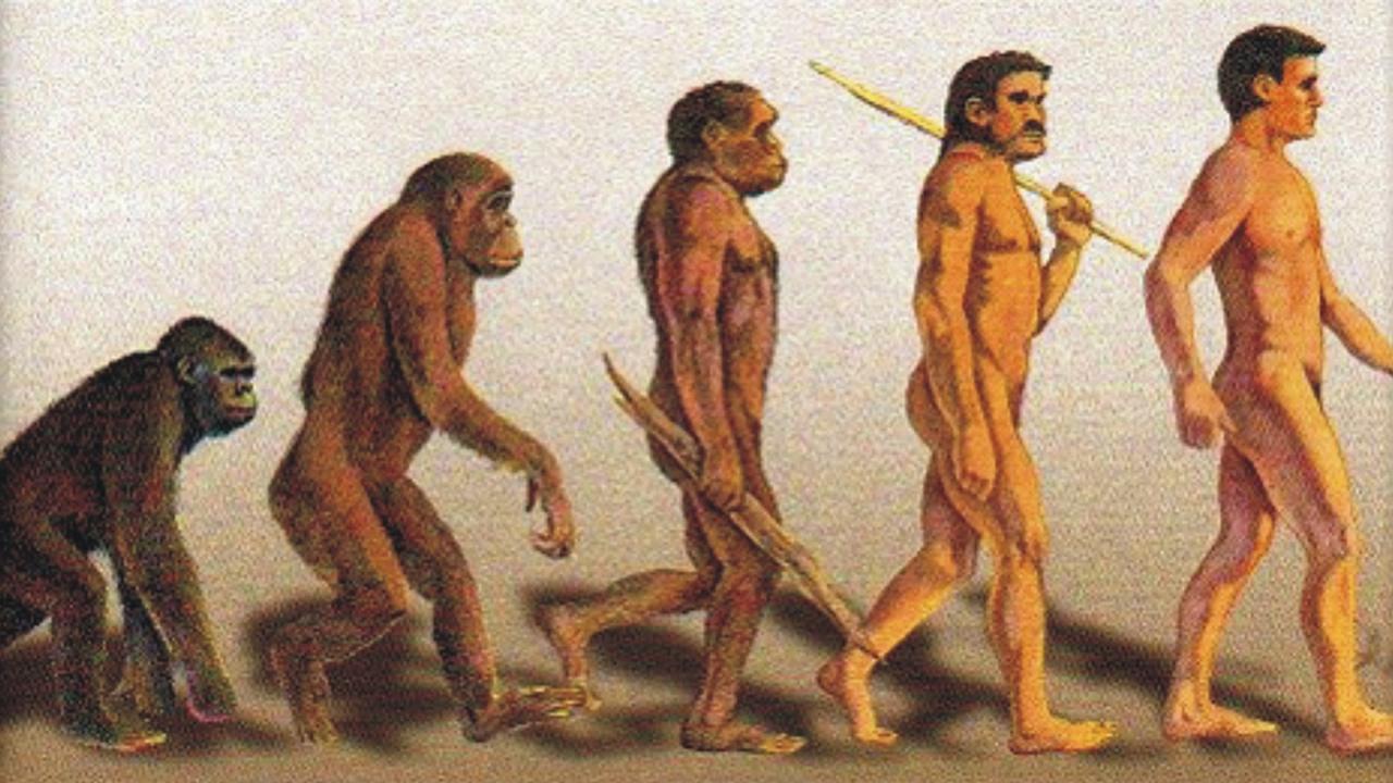 Turquía elimina «la incómoda e inapropiada» Teoría de Darwin del currículo escolar