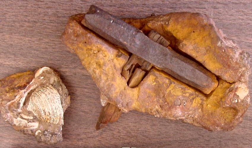 Martillo que muestra el trozo separado de la matriz que contiene lo que parece ser una cáscara de almeja moderna
