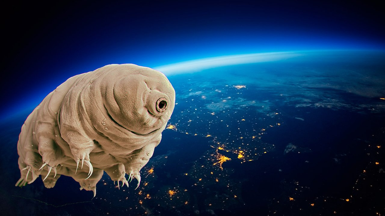 Estos pequeños y adorables animales sobrevivirán a casi cualquier Apocalipsis Global