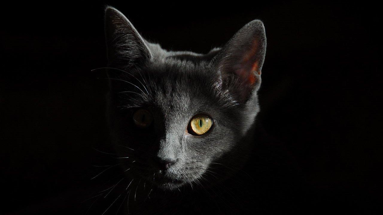 El Aura de un gato puede proteger su hogar de fantasmas y entidades negativas