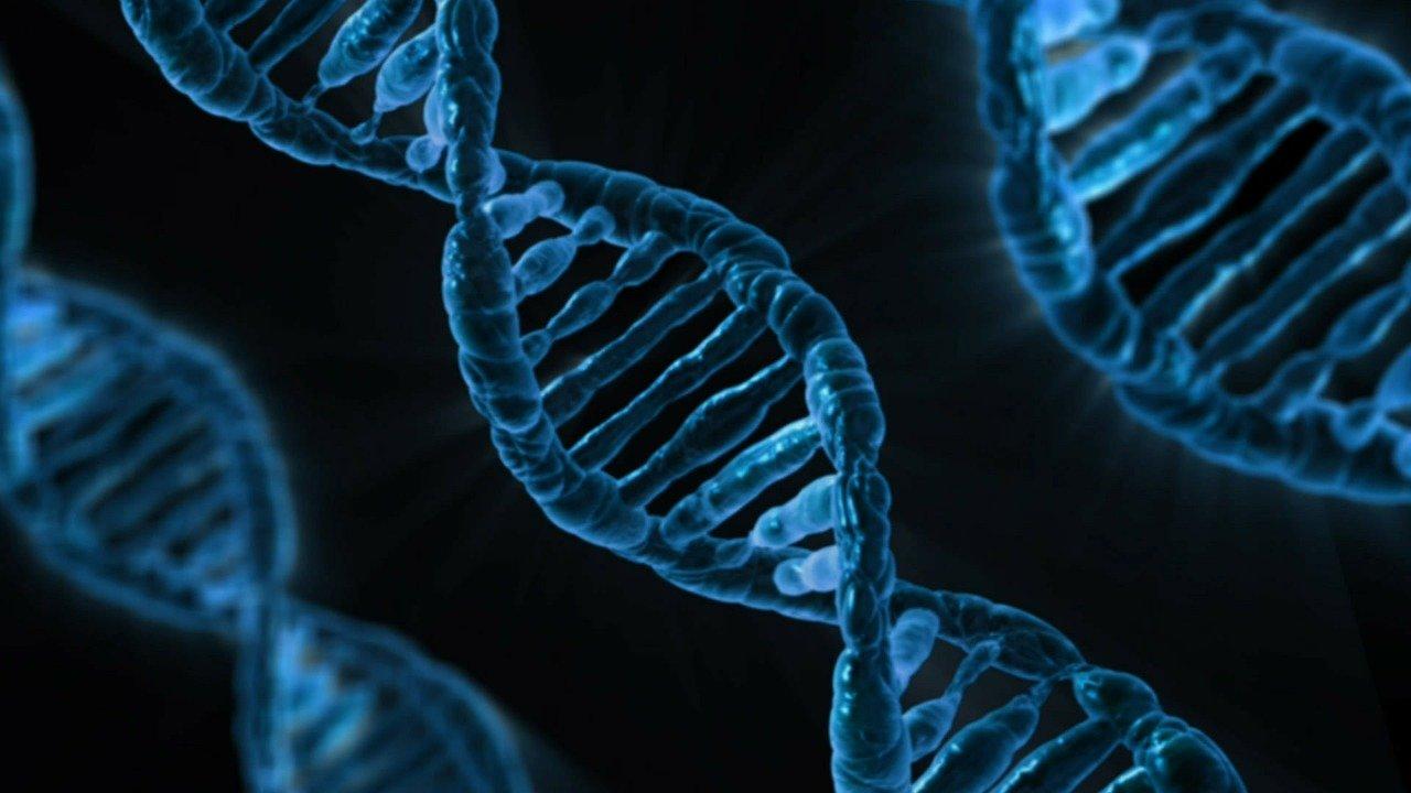 Científicos logran borrar una grave enfermedad genética de un embrión humano
