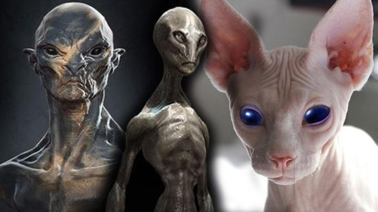 El posible Origen Extraterrestre de los Gatos