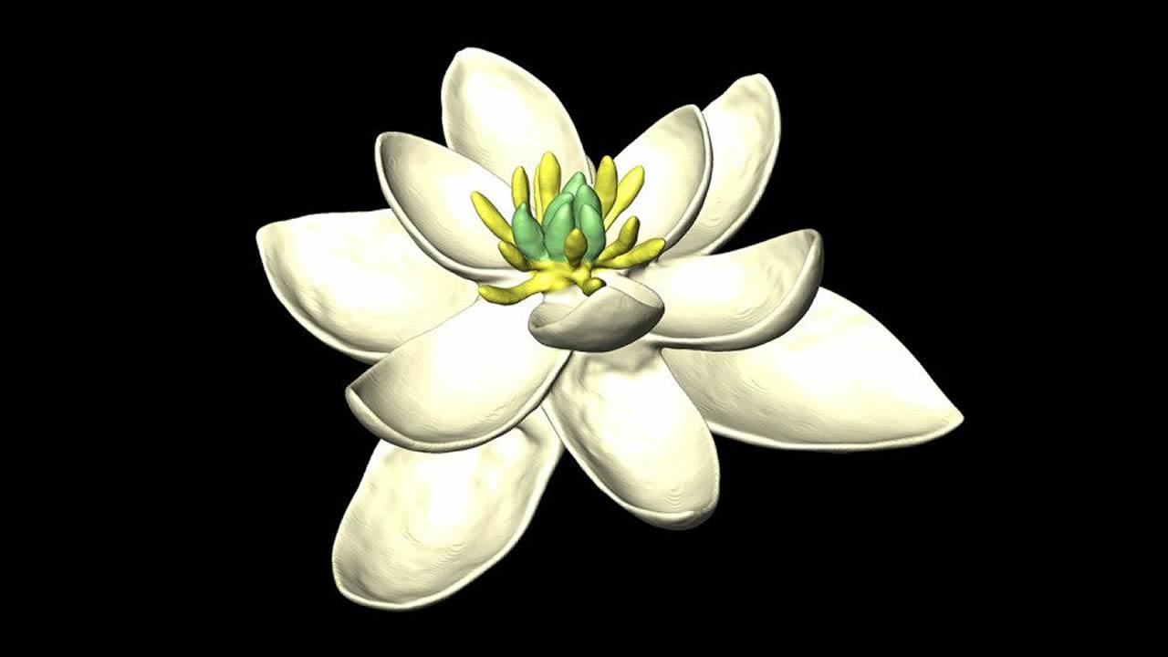 Esta es la primera flor que apareció en el planeta y dio origen a las demás