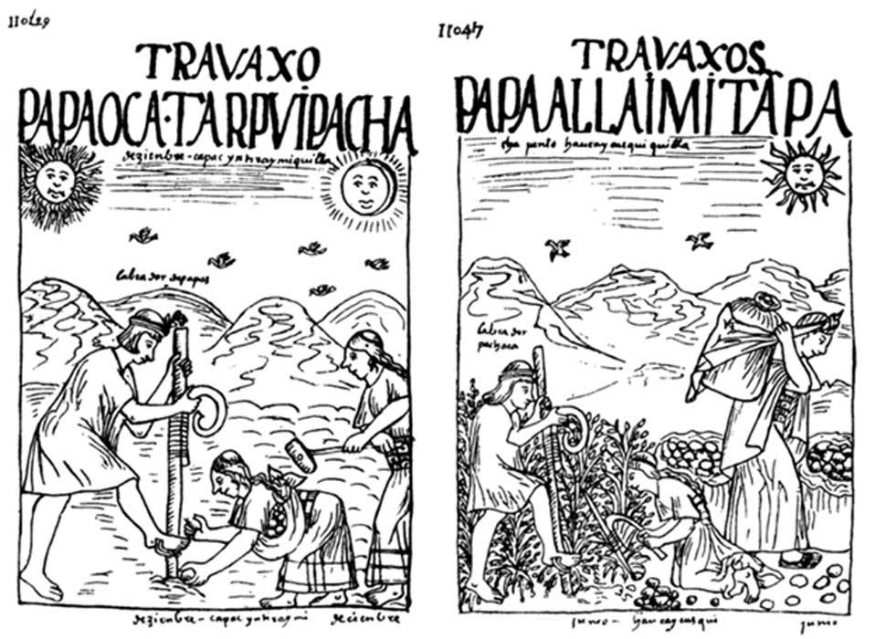 Dibujos de Huamán Poma de Ayala en los que podemos observar la siembra de patatas y otros tubérculos a la izquierda, y su recolección a la derecha. Obsérvese la presencia de Inti y Mama Quilla en el primer dibujo, mientras que en el segundo únicamente aparece Inti.