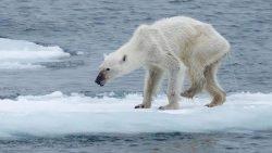NASA ya no investigará el Clima: Trump mata la ciencia «políticamente correcta»