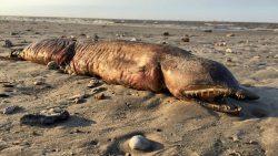 Esta «espeluznante» criatura en Houston finalmente ha sido identificada