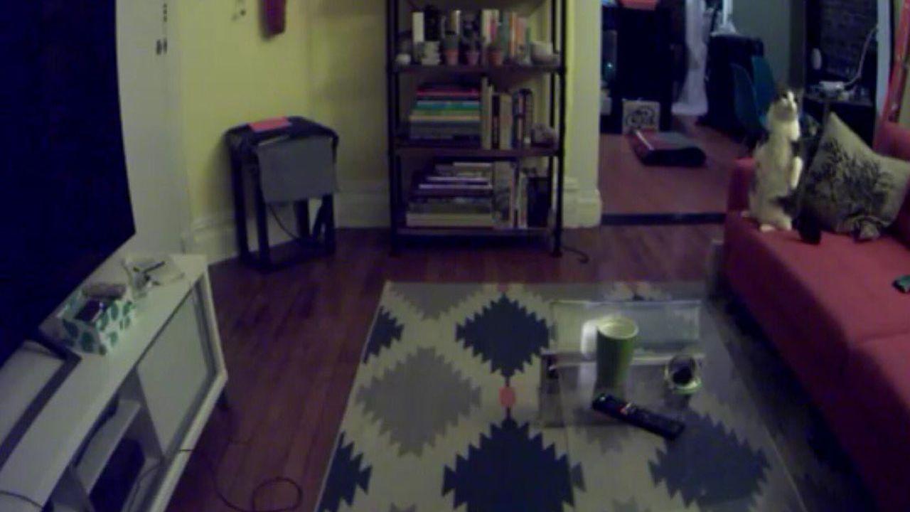 Gatos intentan «cazar» espíritu de niño que atormenta a hombre en New York