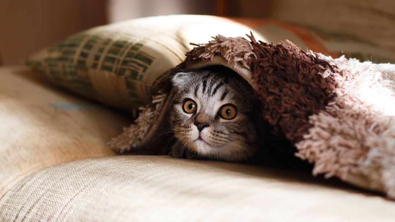 ¿Por qué los gatos arañan los muebles? No, no se están afilando las uñas
