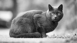 Los gatos y su impresionante conexión con lo paranormal