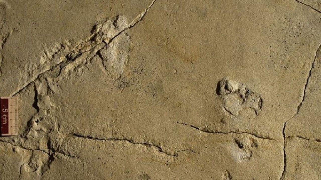 Huellas humanas de 5,7 millones de años desafían la teoría evolutiva humana