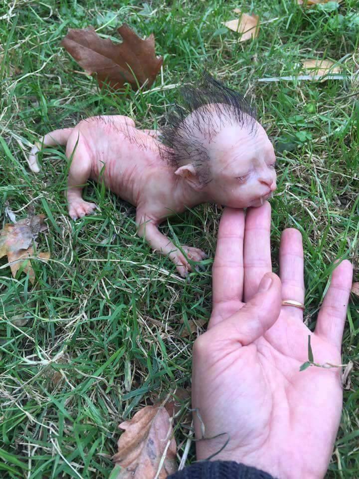 Esta imagen se volvió viral en la red. Sin embargo, no se trataba de una criatura real, sino de un muñeco de silicona.