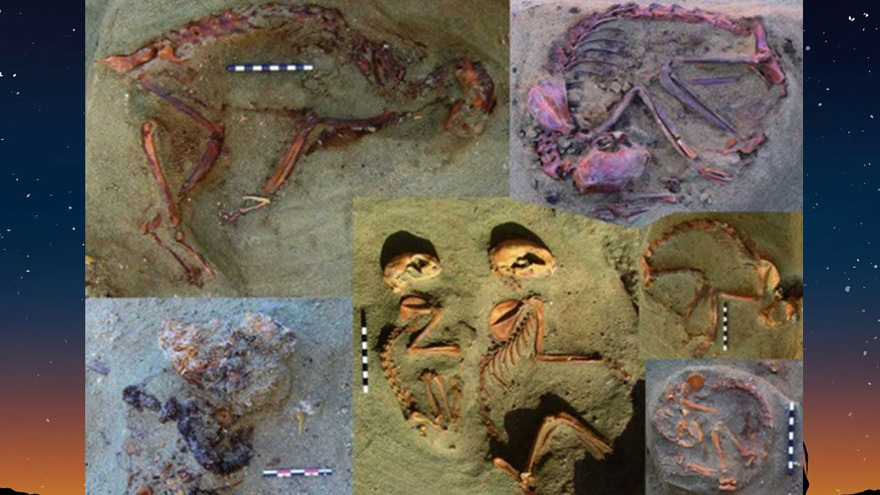 Hallan cementerio de mascotas de hace 2.000 años en Egipto