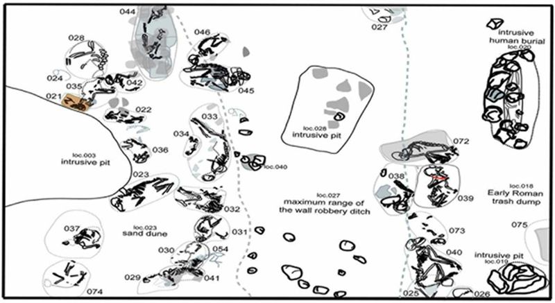 Mapa del cementerio en el que fueron descubiertos los restos de animales, situado en las afueras de Berenice