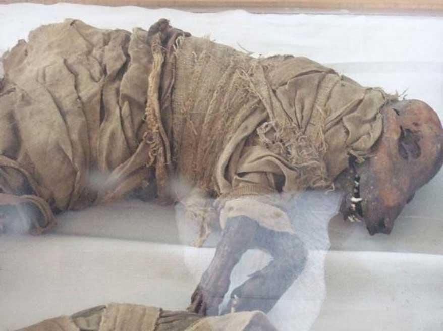 Perro momificado, Asyut, Egipto Medio. Museo de la Escuela Taggart