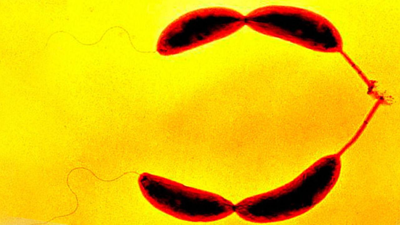Científicos descubren que las bacterias tienen sentido del tacto