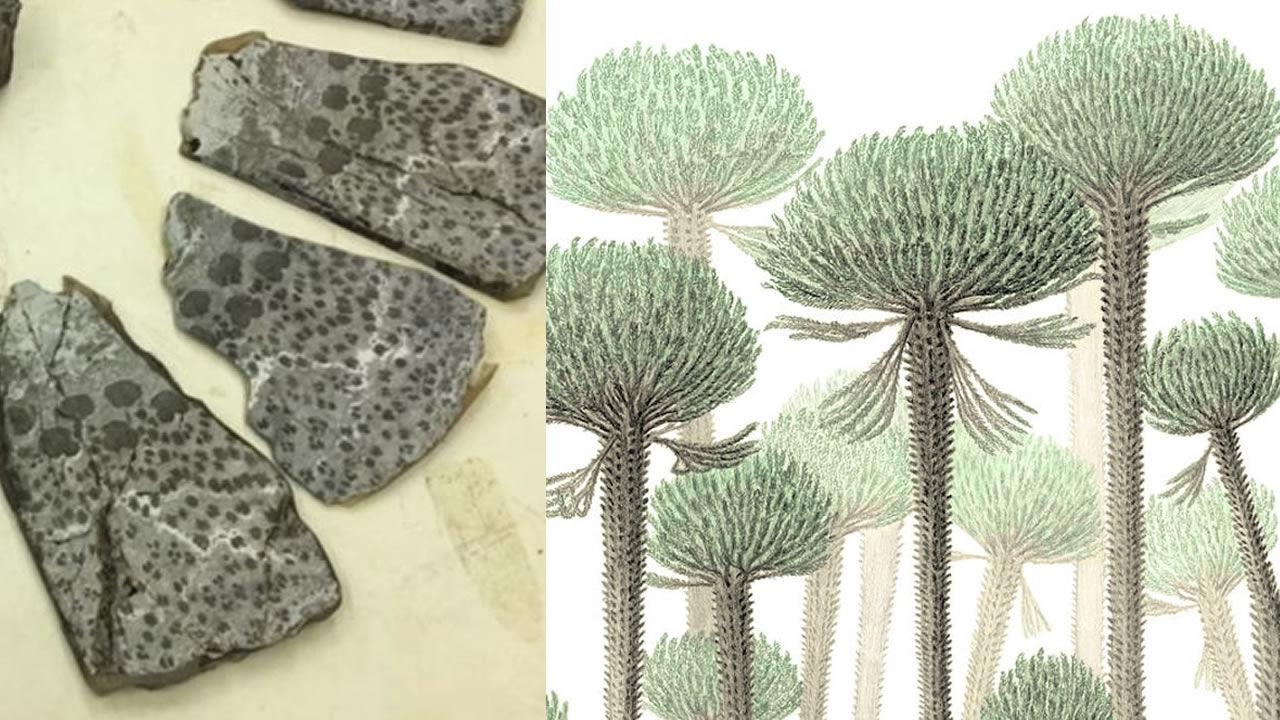 Descubren cómo crecieron los primeros árboles nos núcleos huecos