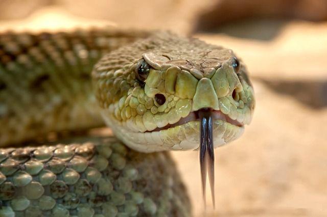 ¿Fobia a las arañas y serpientes? La culpable sería la evolución
