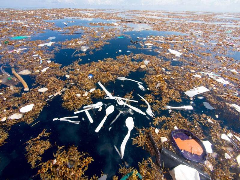 Se espera que esta prohibición disminuya la contaminación de plásticos en los océanos