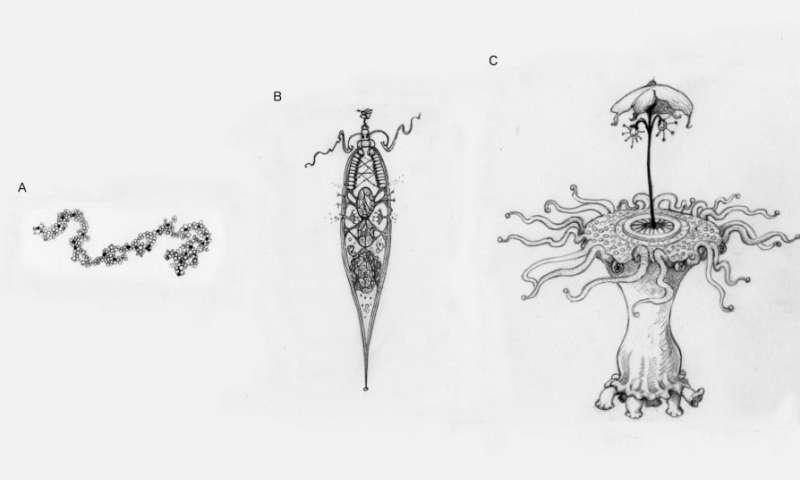 Estas ilustraciones representan diferentes niveles de complejidad adaptativa que podríamos imaginar al pensar en alienígenas. (a) Una molécula de replicación simple, sin diseño aparente. Esto puede o no someterse a la selección natural. (b) Una entidad increíblemente simple, similar a una célula. Incluso algo así de simple tiene suficiente artilugio de partes que debe someterse a la selección natural. (c) Es probable que un extraterrestre con muchas partes intrincadas trabajando en conjunto haya experimentado transiciones importantes