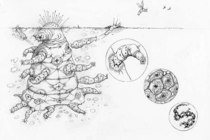 «The Octomite». Un alien complejo que comprende una jerarquía de entidades, donde cada colección de entidades de nivel inferior tiene intereses evolutivos alineados de modo que el conflicto se elimina de manera efectiva. Estas entidades participan en la división del trabajo, con varias partes especializadas en diversas tareas, de tal manera que las partes son mutuamente dependientes