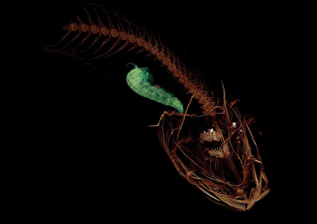 Investigadores descubren un pez que vive a más de 8.000 metros de profundidad