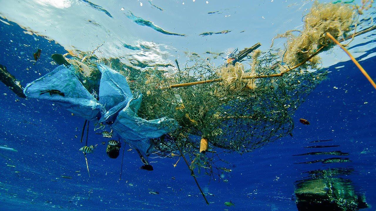 Criaturas marinas de las zonas más profundas son víctimas de algo muy perturbador