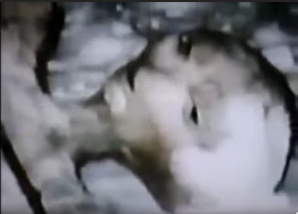 Escena del vídeo que muestra a un supuesto extraterrestre muerto