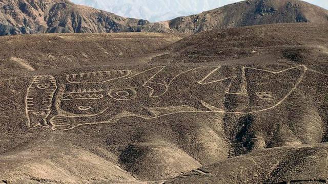 La Orca mide 60 metros de largo y fue dibujado sobre la ladera de una loma en las afueras de Palpa. Es el más antiguo de las «líneas» de Nazca.