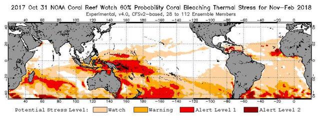 Existe una probabilidad mayor al 60 por ciento de que la parte sur del arrecife experimente decoloración