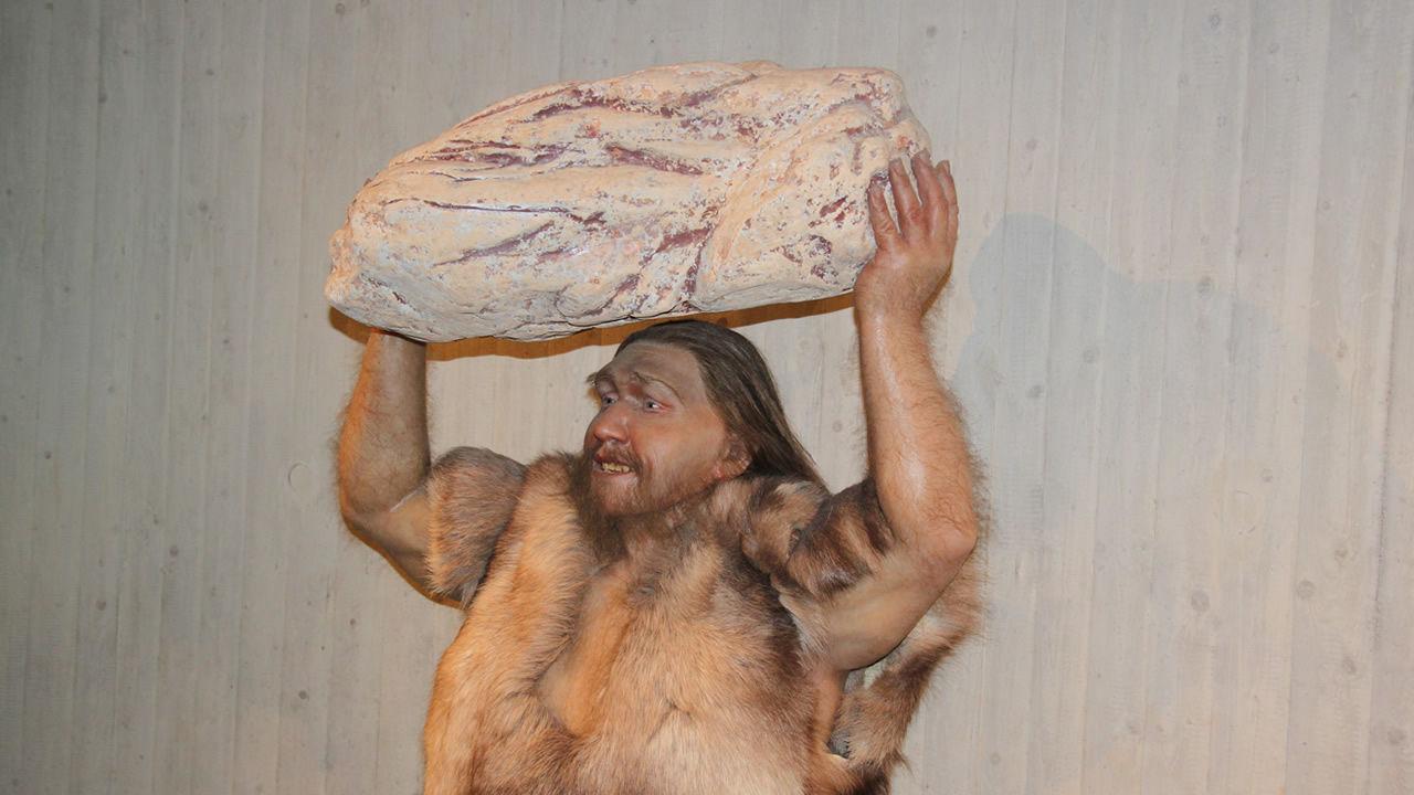 Los humanos no eran más inteligentes que los neandertales, solo los superamos
