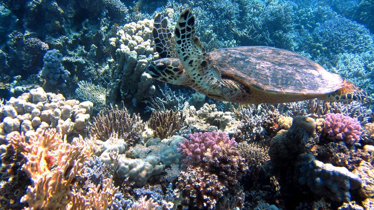 NOAA predice un mayor blanqueamiento de la Gran Barrera de Coral