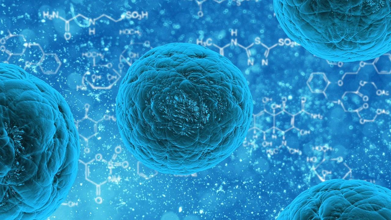 Científicos descubren un nuevo método para rejuvenecer las células humanas