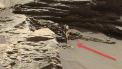 ¿Captó el Curiosity una planta o árbol fosilizado en Marte?