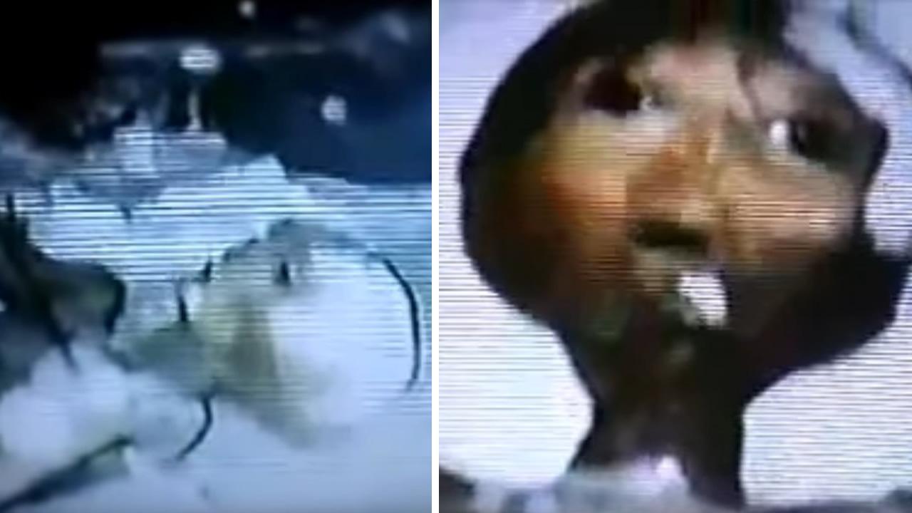 ¿Es este un extraterrestre grabado en vídeo en 1992 en Suiza?