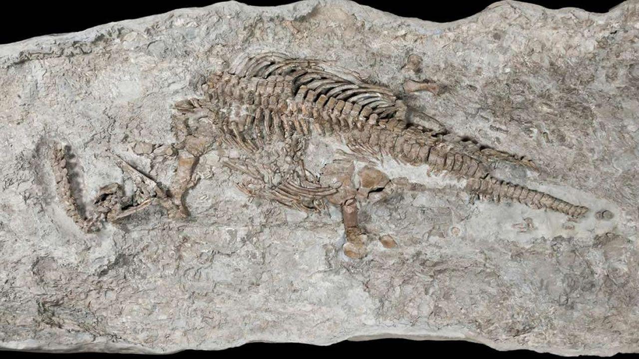 Esqueleto de plesiosaurio hallado es el más antiguo jamás descubierto