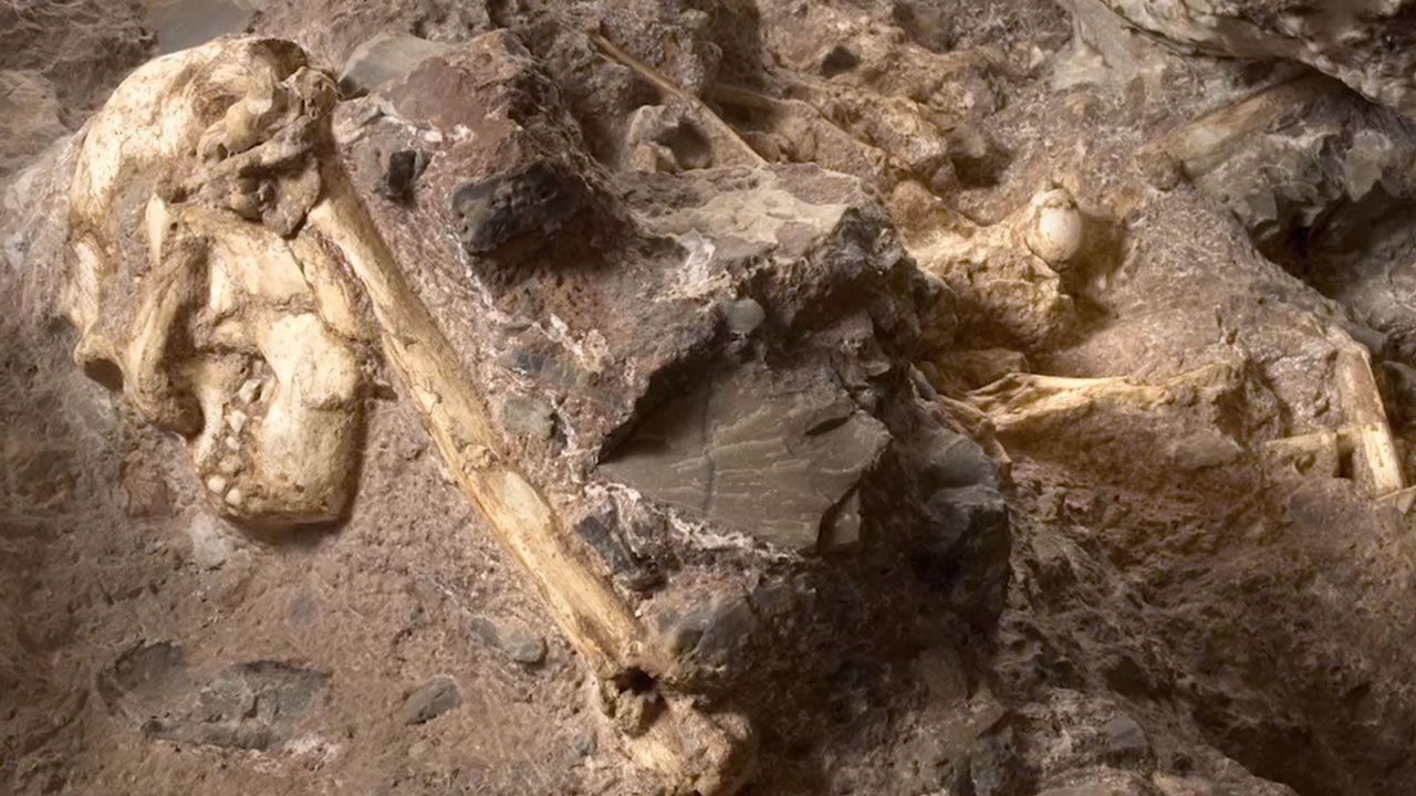Este esqueleto de 3.6 millones de años es el ancestro humano más antiguo y completo jamás visto