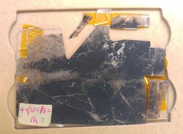 Un microfósil: una parte del grupo de fósiles más antiguos que todos los descubiertos