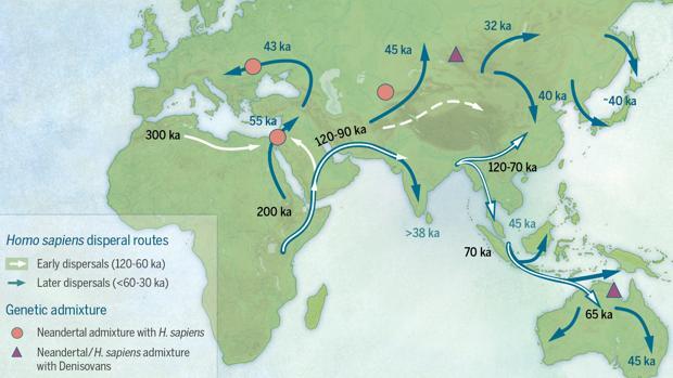 Movimientos de humanos modernos a finales del Pleistoceno. Estos humanos tuvieron descendencia con Denisovanos y Neandertales