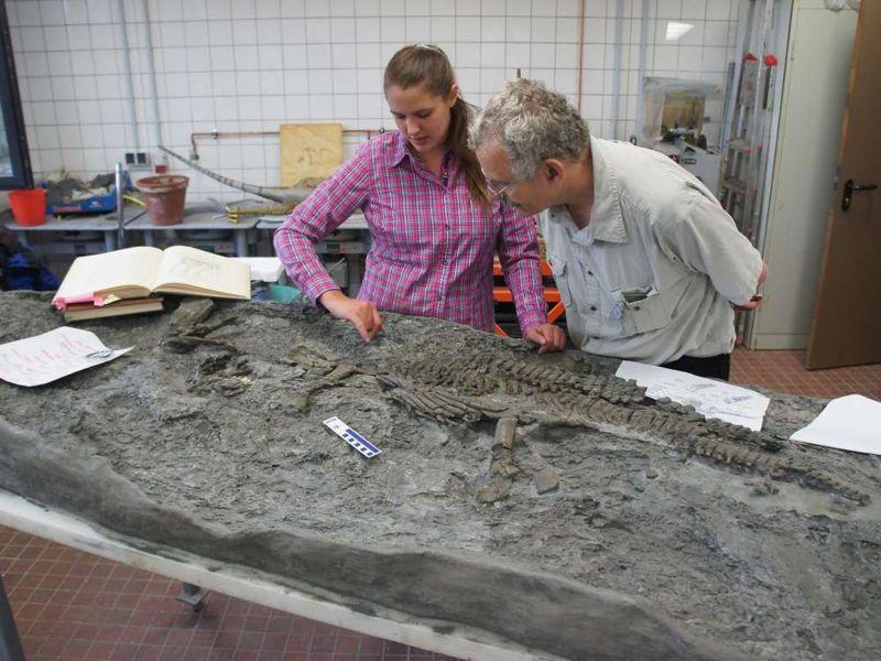Los paleontólogos Tanja Wintrich y Martin Sander de la Universidad de Bonn inspeccionan el esqueleto hallado