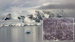 Antártida: Científicos hallan un bosque fósil de 280 millones de años