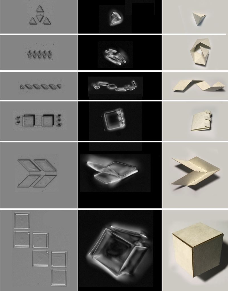 Los bimorfos de vidrio de grafeno pueden tomar múltiples formas, como se puede ver en la imagen