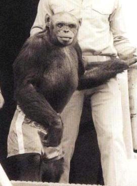 Oliver era un simio que fue presentado como un eslabón perdido o «humanzee» debido a su apariencia inusualmente similar a la humana y su tendencia a caminar erguido. A pesar de ello, los científicos determinaron que Oliver no era un híbrido humano-chimpancé.