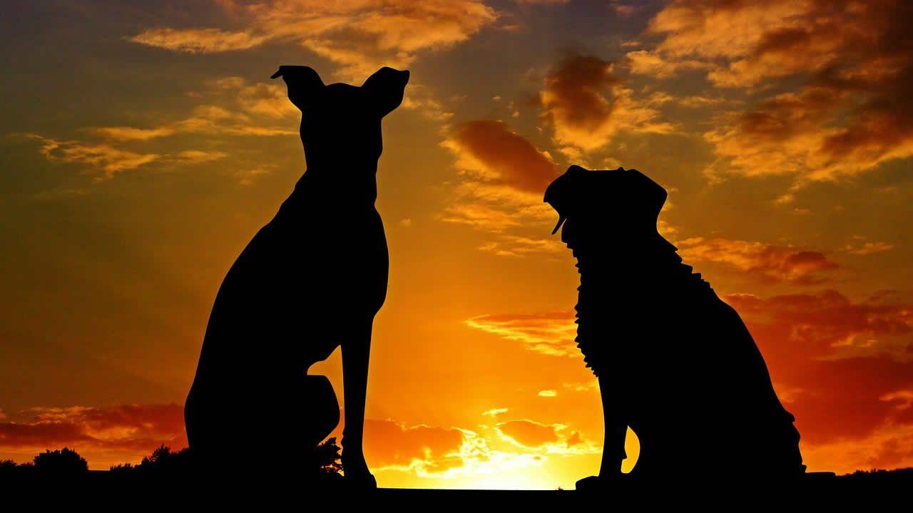 Perros custodian en medio de la autopista el cuerpo de otro perro atropellado