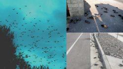 Cientos de pájaros caen en Roma, sin explicación, días antes en Utah