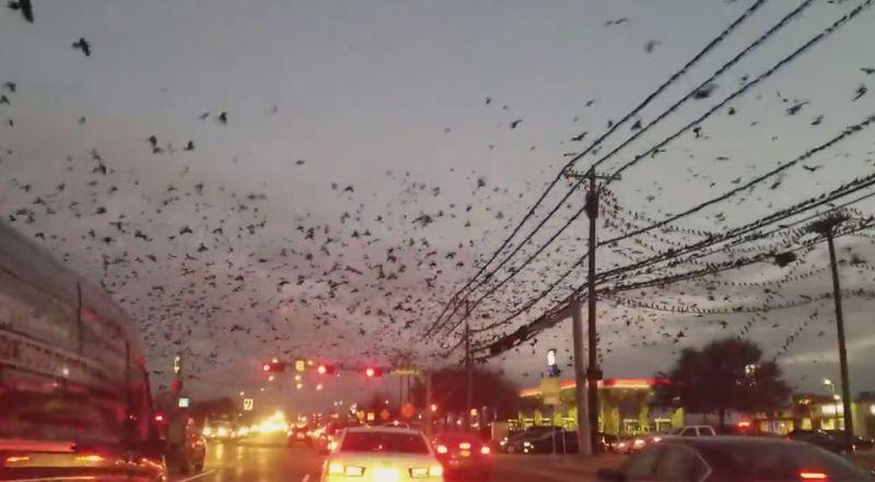 Aves invaden una estación de servicio en Dallas, el 4 de febrero (2018)
