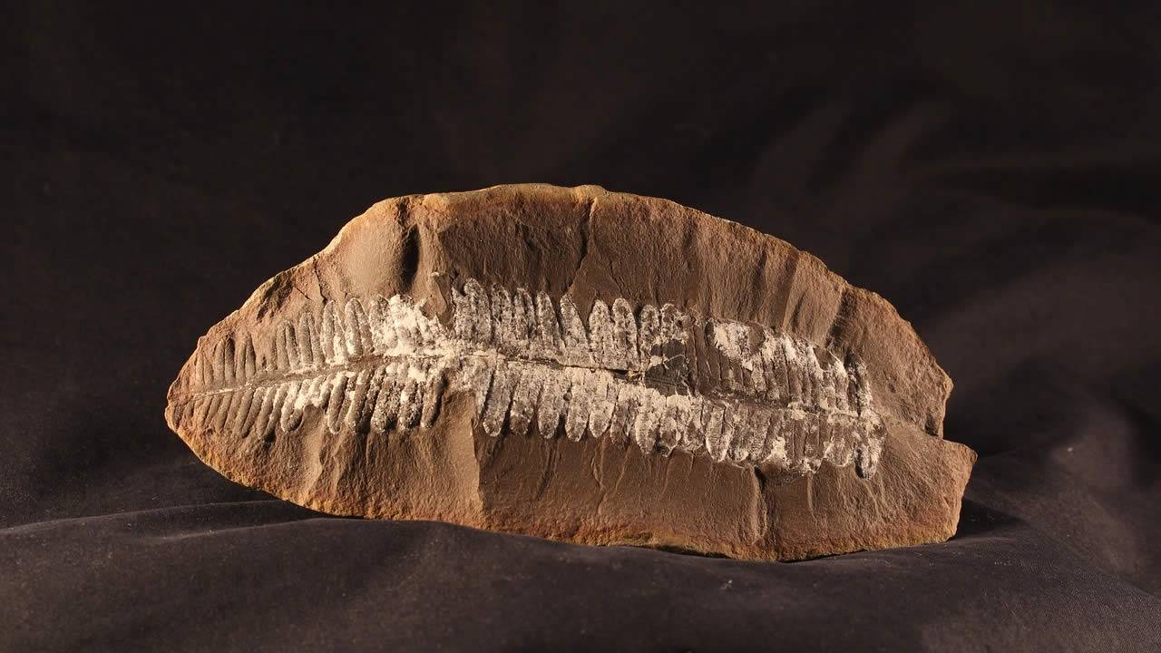 Investigación descubre que las plantas aparecieron 100 millones de años antes de lo que se pensaba