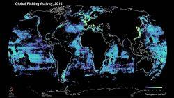 Rastrean pesca comercial y descubren que más de la mitad de los océanos son explotados