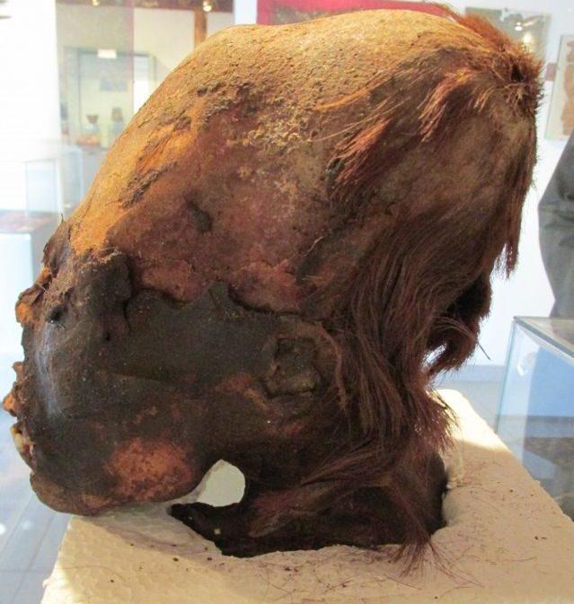 Cráneo alargado de Paracas que presenta restos de pelo rojizo. Ha sido llamado «Cleopatra», el por qué es evidente